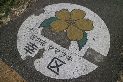 幸区の花 ヤマブキ
