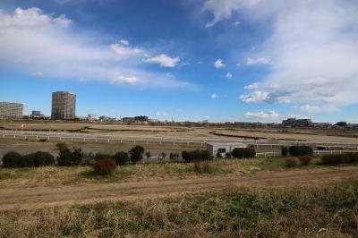 川崎競馬場練習馬場の全景