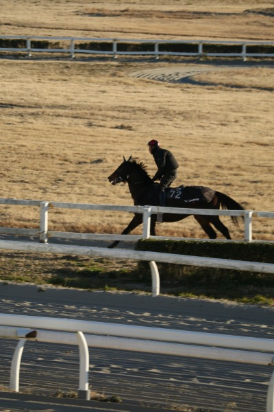 川崎競馬の騎手による練習