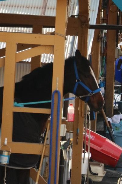 厩舎の競走馬