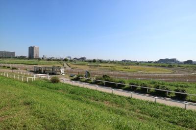 川崎競馬場 練習馬場