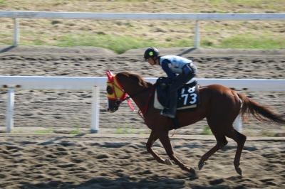 練習馬場の競走馬