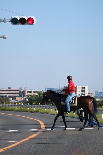 多摩沿線道路を渡る騎手と競走馬