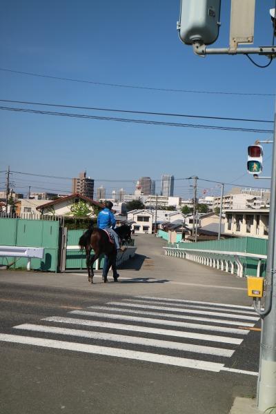 トレーニングセンターに帰る騎手と競走馬