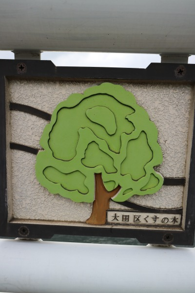 大田区の木「くすのき」