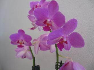 店内に飾られた花