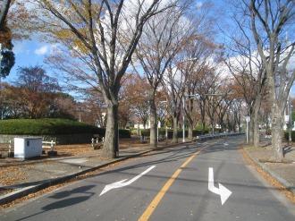 等々力緑地のアプローチ道路