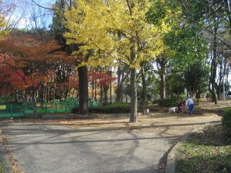 市民ミュージアム近くの森