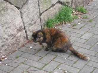 等々力緑地の野良猫