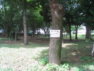 とどろきアリーナ西側の森