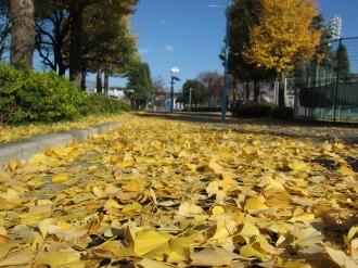 落葉が敷き詰められた歩道