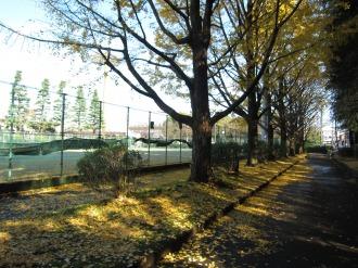テニスコート南側の紅葉
