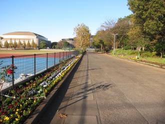 市民ミュージアムへの道