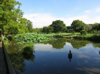 等々力緑地の日本庭園の池