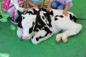 生後2週間の子牛