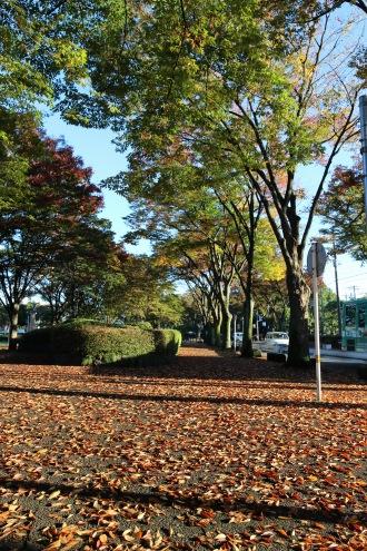 歩道の落葉