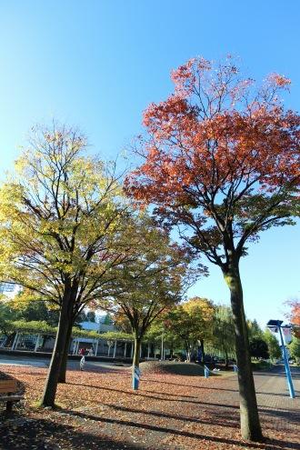 フロンパークの紅葉
