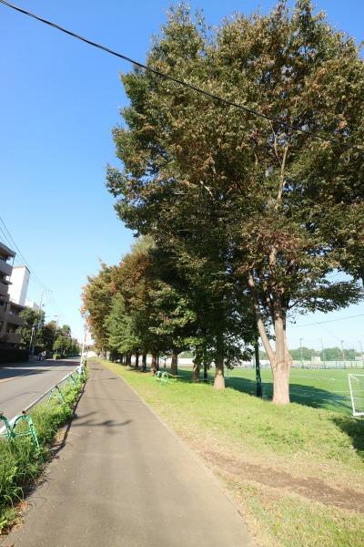 等々力第一サッカー場西側の歩道