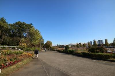 市民ミュージアム前から、ふるさとの森(左側)をのぞむ