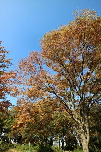 背の高い木々