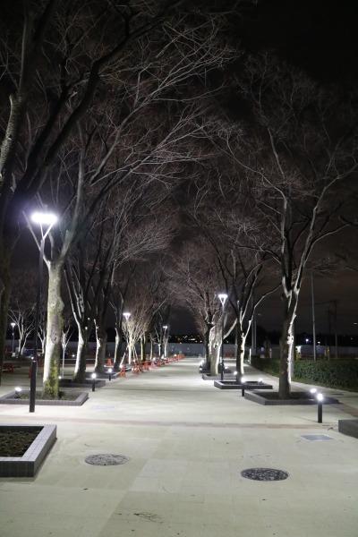 並木の夜間ライトアップ