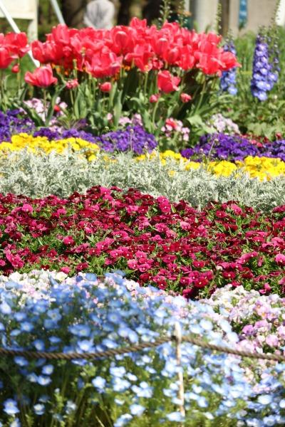 色とりどりの花壇