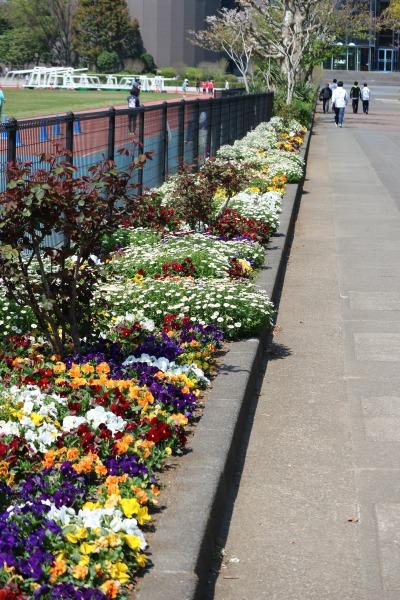 市民ミュージアムに続く道の花壇
