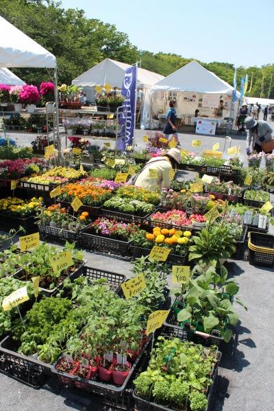 「花と緑の市民フェア」「川崎市畜産まつり」が開催された等々力緑地