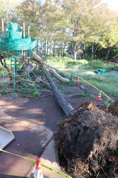 台風通過直後の倒木