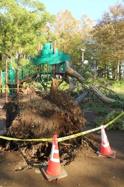 倒木の根の部分