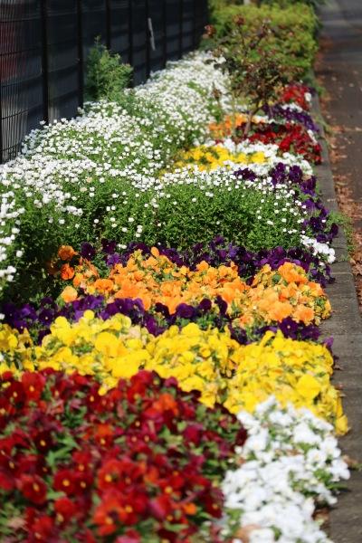 市民ミュージアムに向かう道の花壇