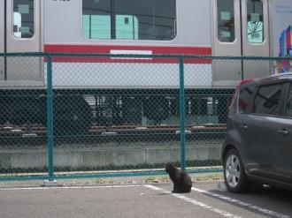 元住吉検車区そばの黒猫