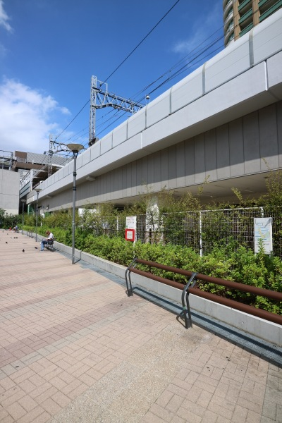 撤去が計画される植栽とフェンス