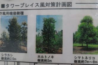 防風植栽の種類