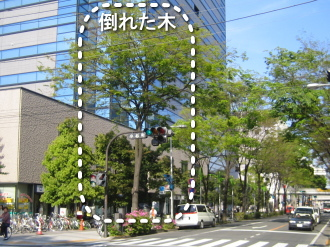 武蔵小杉タワープレイス前の街路樹(倒れる前)