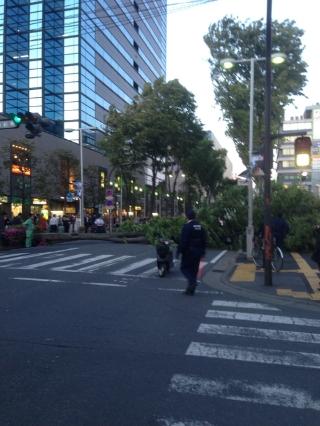 倒れた街路樹