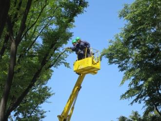 武蔵小杉タワープレイス前の街路樹剪定作業