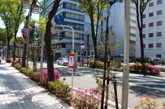 武蔵小杉タワープレイス前の並木