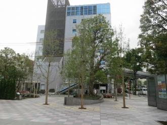 武蔵小杉タワープレイス南東角地の街路樹