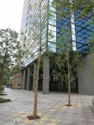 南東角地の新しい街路樹