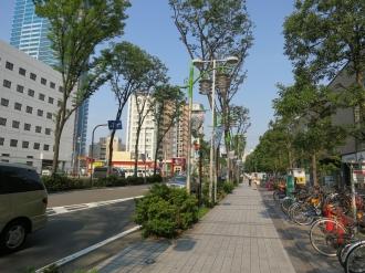 武蔵小杉タワープレイス前の街路樹(ケヤキ)