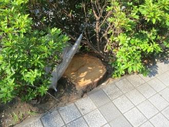 街路樹が伐採されたあと