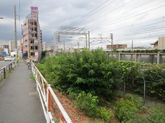 綱島街道・上丸子跨線橋の栗の木