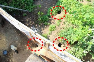 緑地のウサギ穴(赤丸部分)