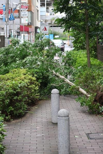 イトーヨーカドー武蔵小杉駅前店そばの倒木