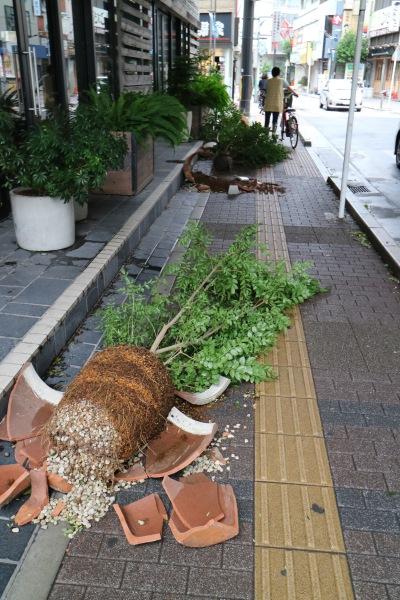 パブリックハウスの鉢植え転倒