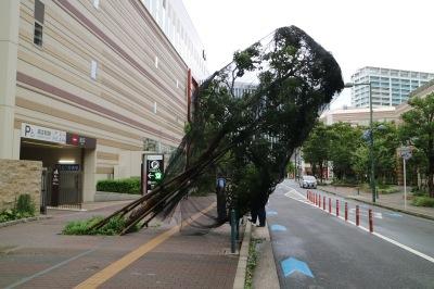 ららテラス武蔵小杉前の倒木