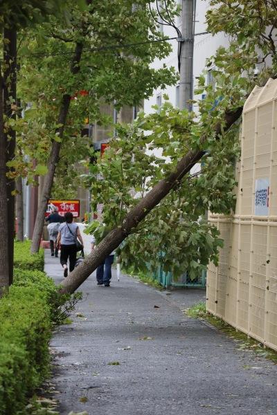 南武沿線道路の倒木