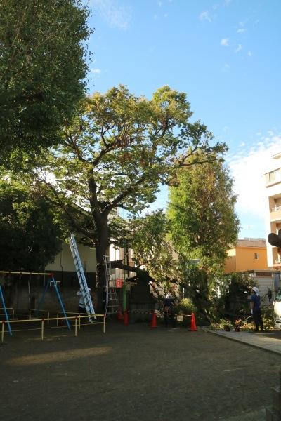 境内の倒木