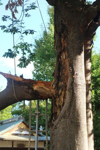 枝が折れた部分